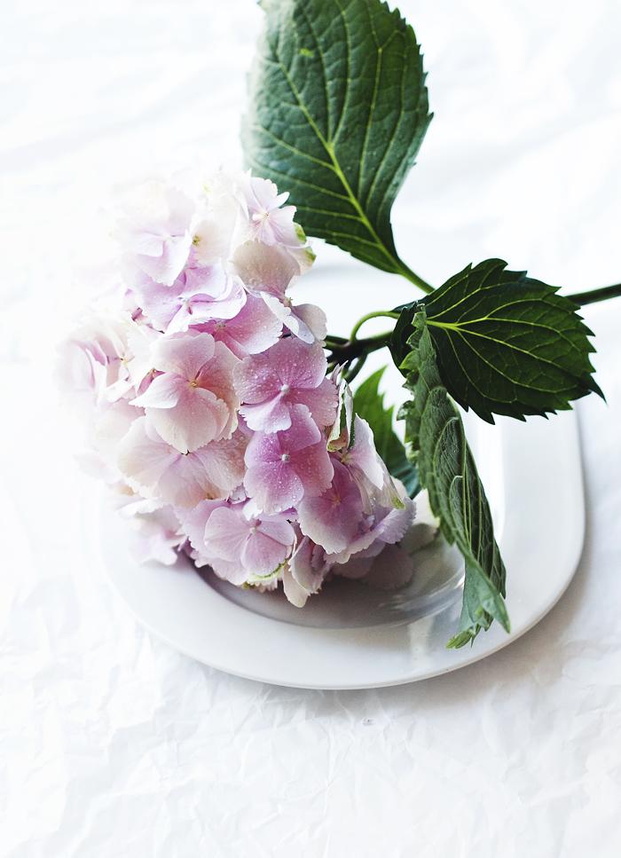 hortensiapinkki_suvisurlevif.jpg