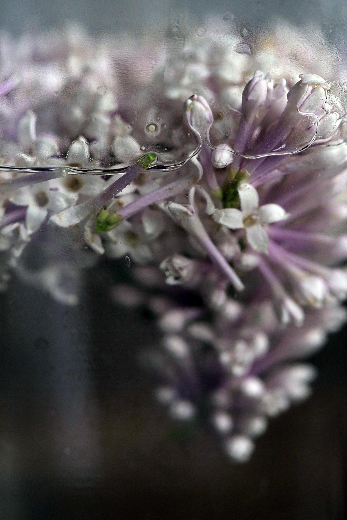 lilac-flower-water.jpg