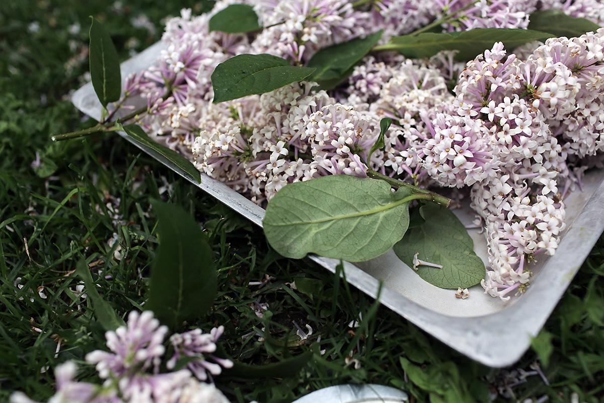 lilac-flowers.jpg