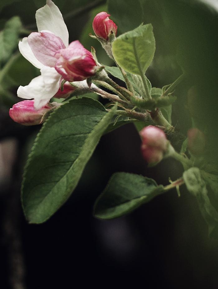 puutarhasta1_suvisurlevif.jpg