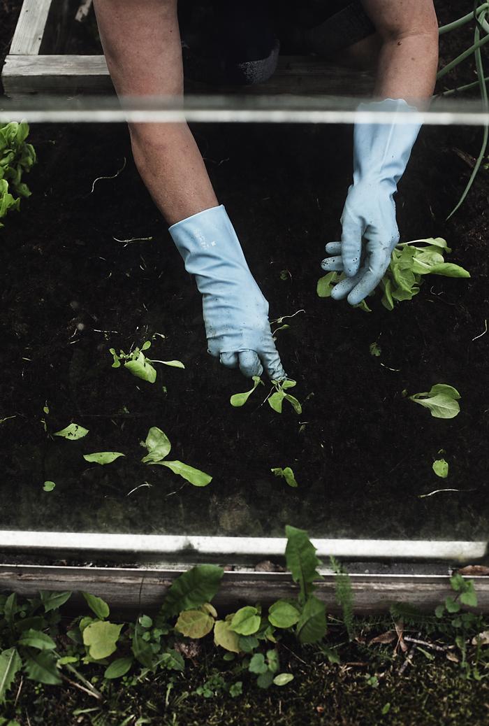 puutarhasta2_suvisurlevif.jpg
