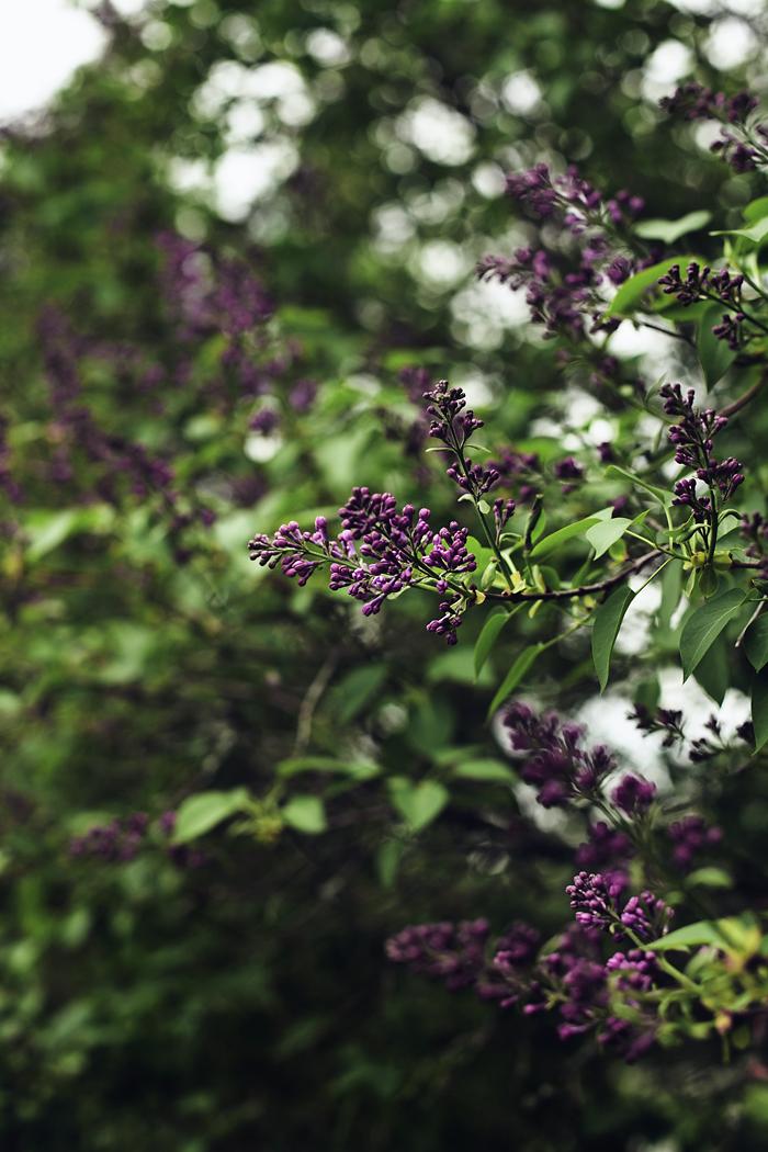 puutarhasta3_suvisurlevif.jpg