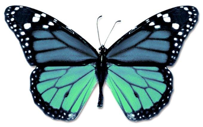 butteryfly_blue_aqua.jpg