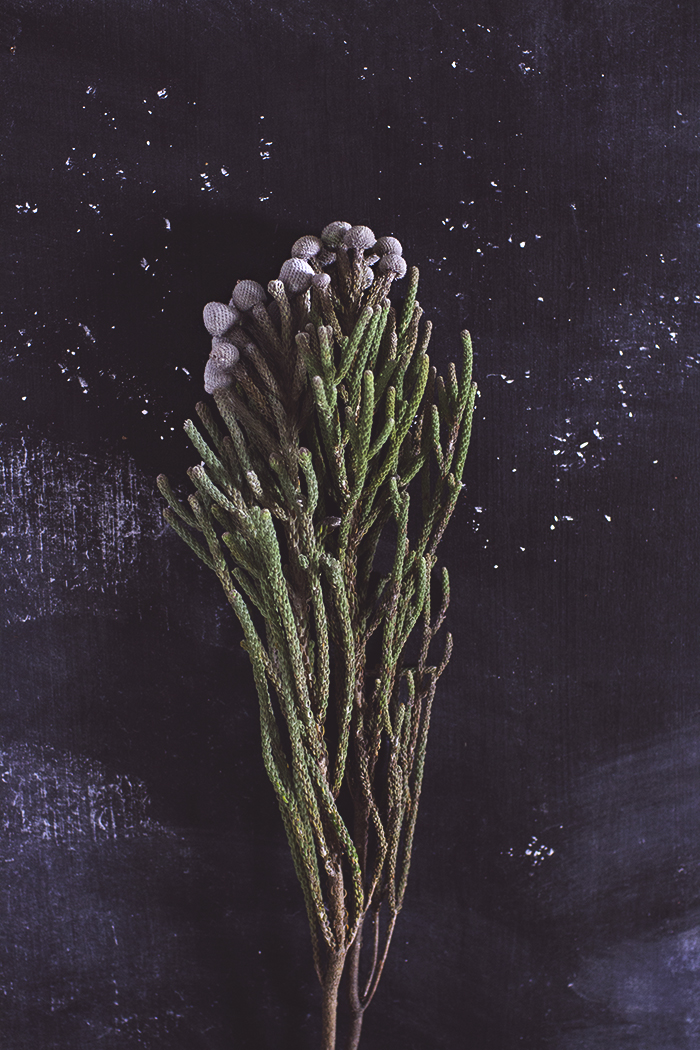 joulu-kukkia_copy.jpg