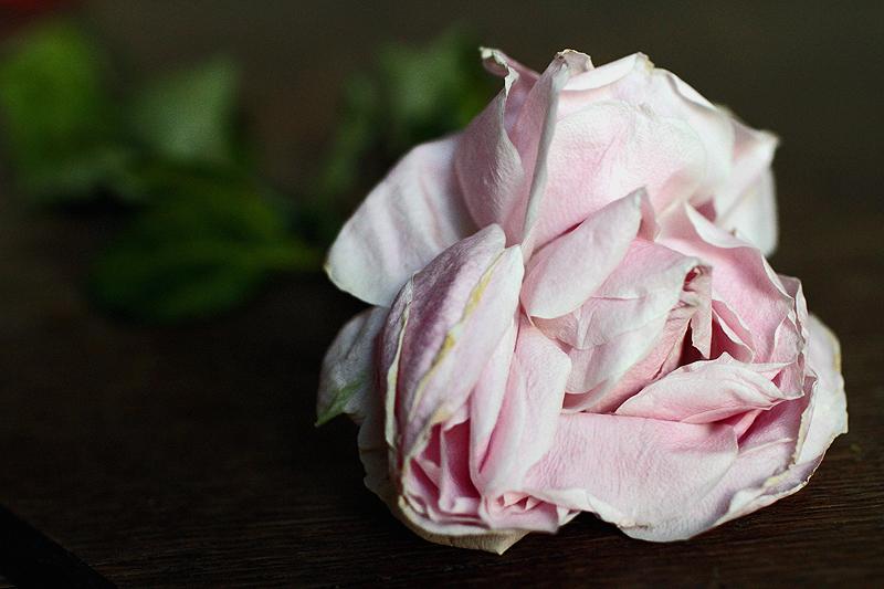 kuiva-ruusu2.jpg