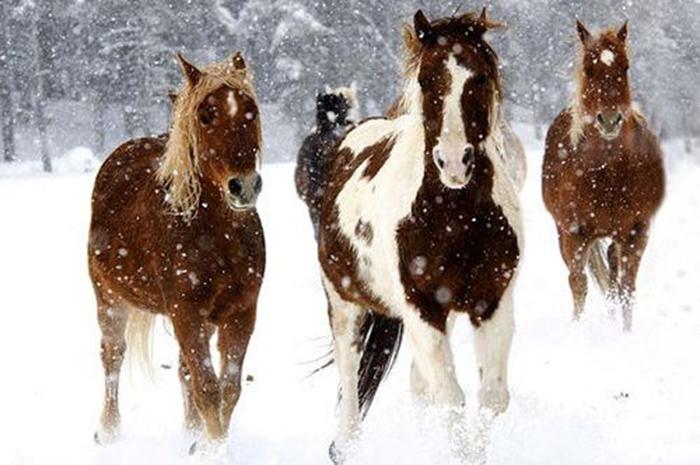 hevoset-lumessa_0.jpg
