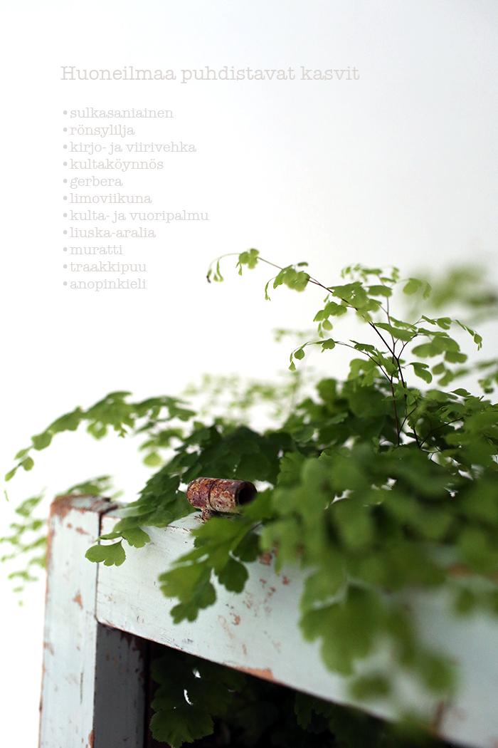 huoneilmaa-puhdistavat-kasvit.jpg