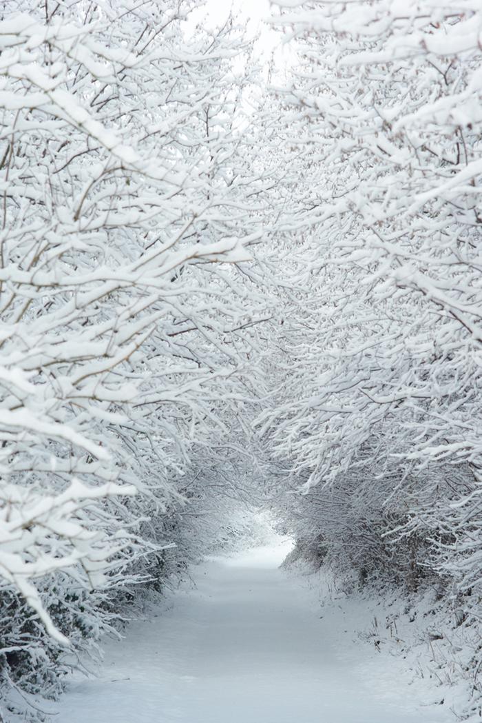 luminen-metsapolku.jpg