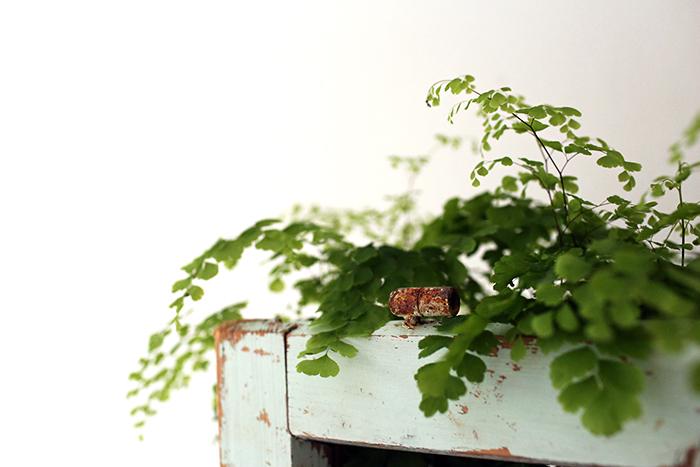 Hoitavat huonekasvit
