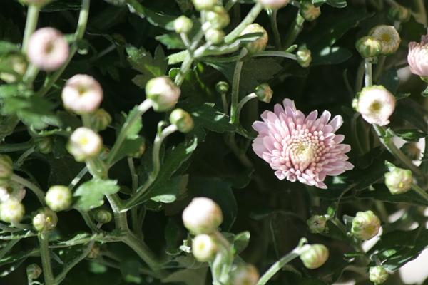 kukkia2.JPG