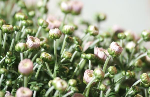 kukkia3.JPG