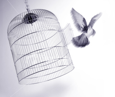 open_cage.jpg
