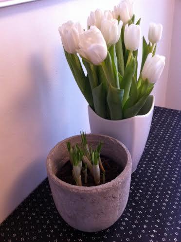 Kevät keittiönpöydällä