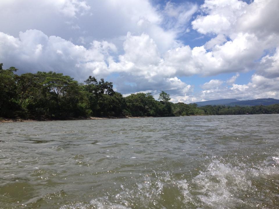 viidakko2.jpg