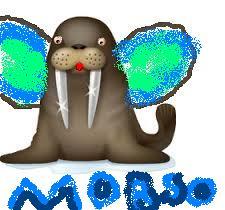 taika_moroso.jpg