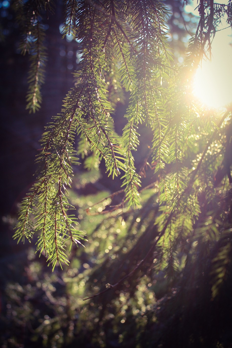 AdobePhotoshopExpress_2013_11_23_173558.jpg