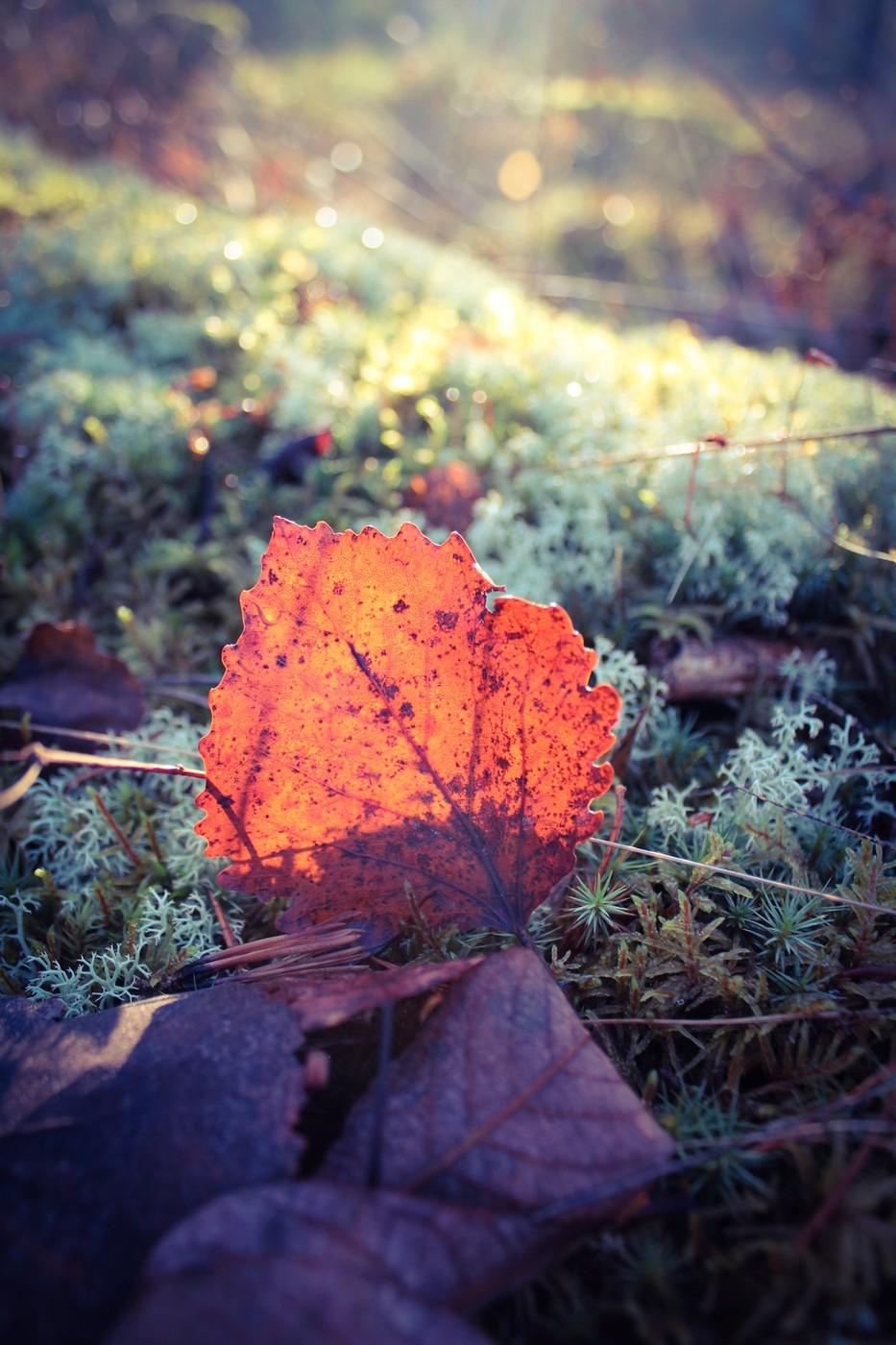 AdobePhotoshopExpress_2013_11_23_173933.jpg