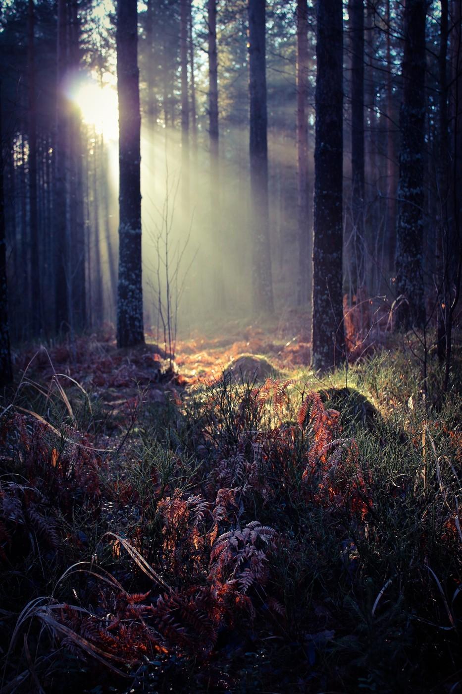 AdobePhotoshopExpress_2013_11_23_174546.jpg