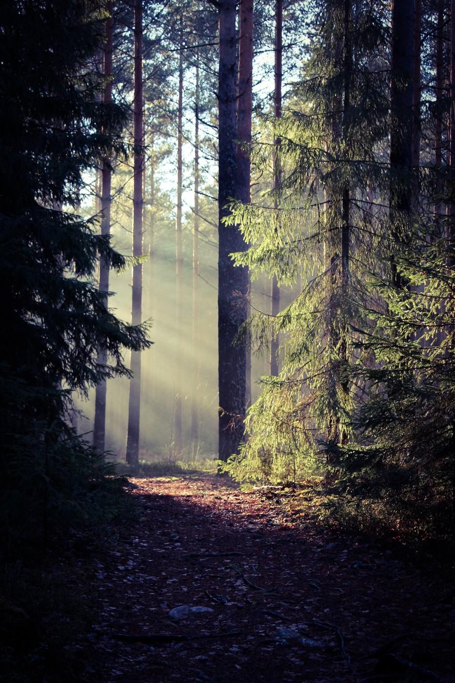 AdobePhotoshopExpress_2013_11_23_174836.jpg