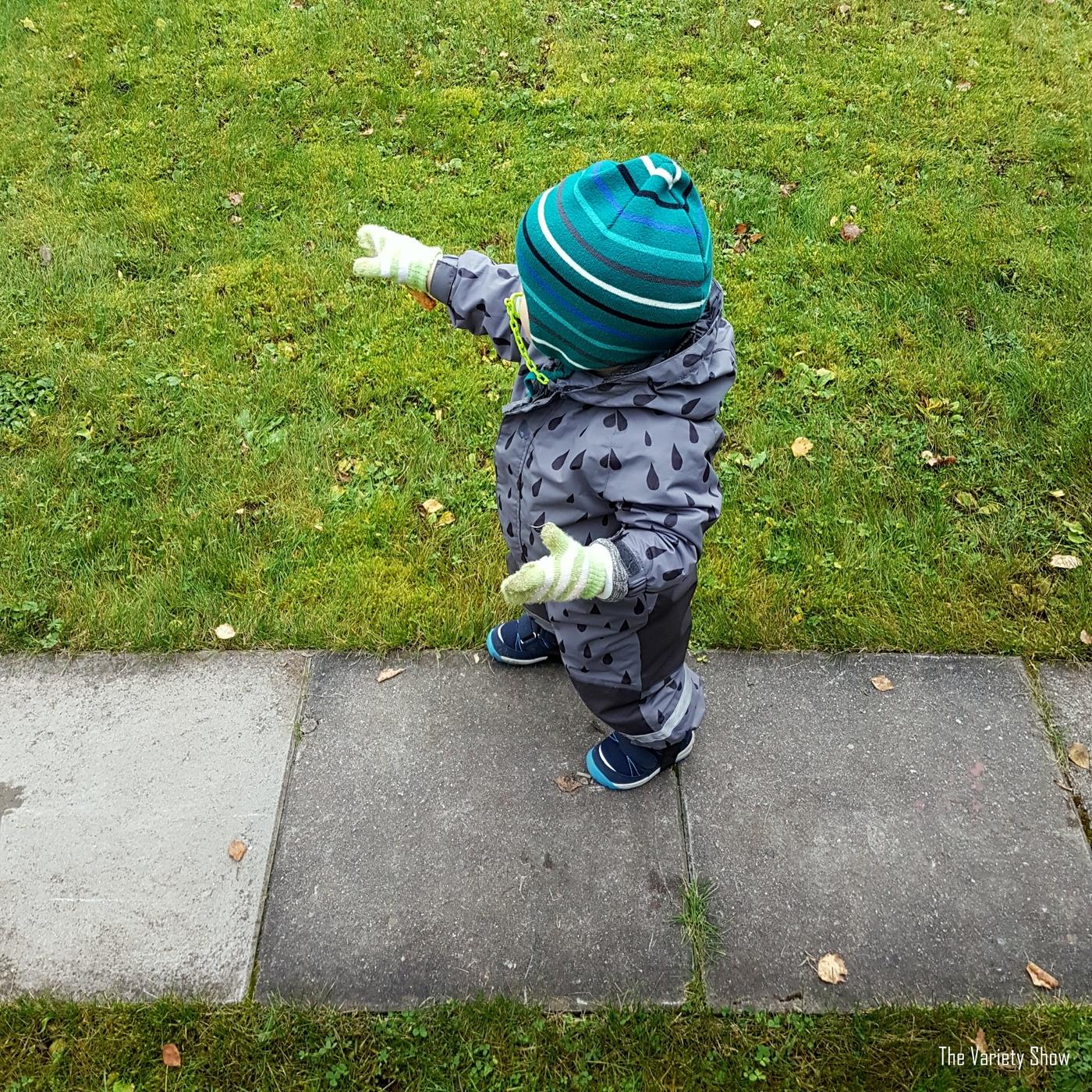 Taapero nurmikko syksy.jpg