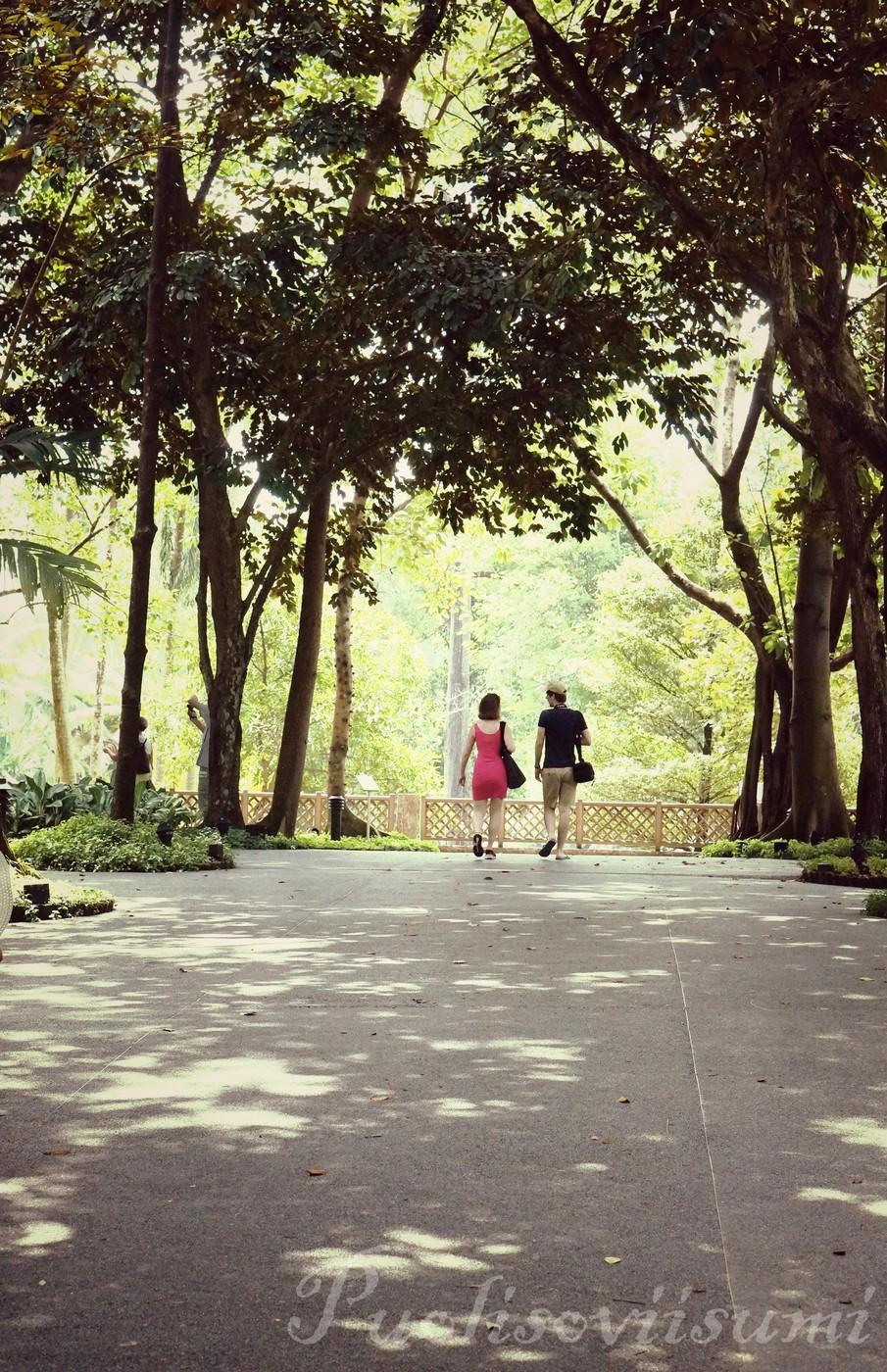 Botanic Gardens 6.jpg