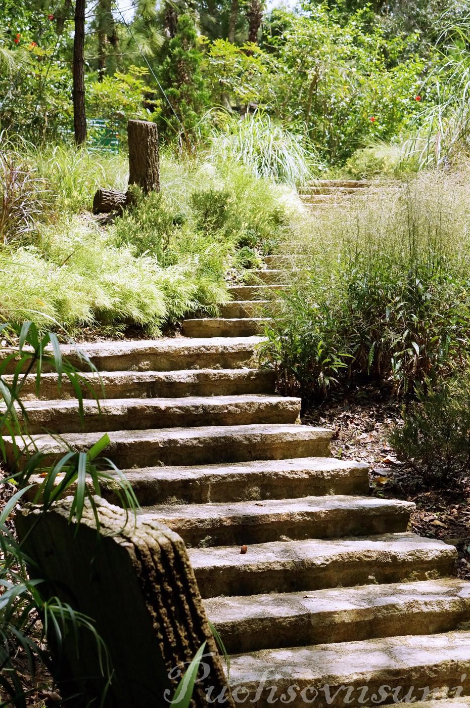 Botanics Garden.jpg