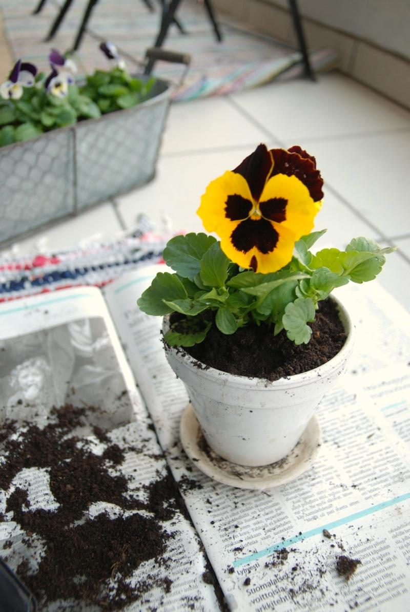 Kukkia5.JPG