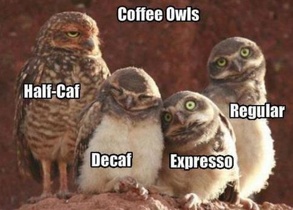 funny-pictures-coffee-owls.jpg
