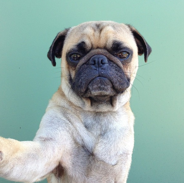 Perjantaipiristys: Selfie-koira