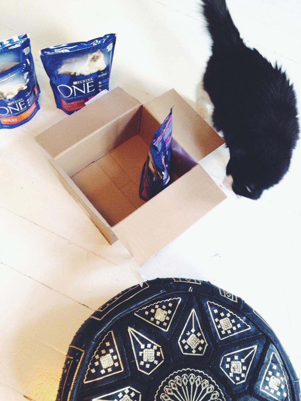 Kissaihminen