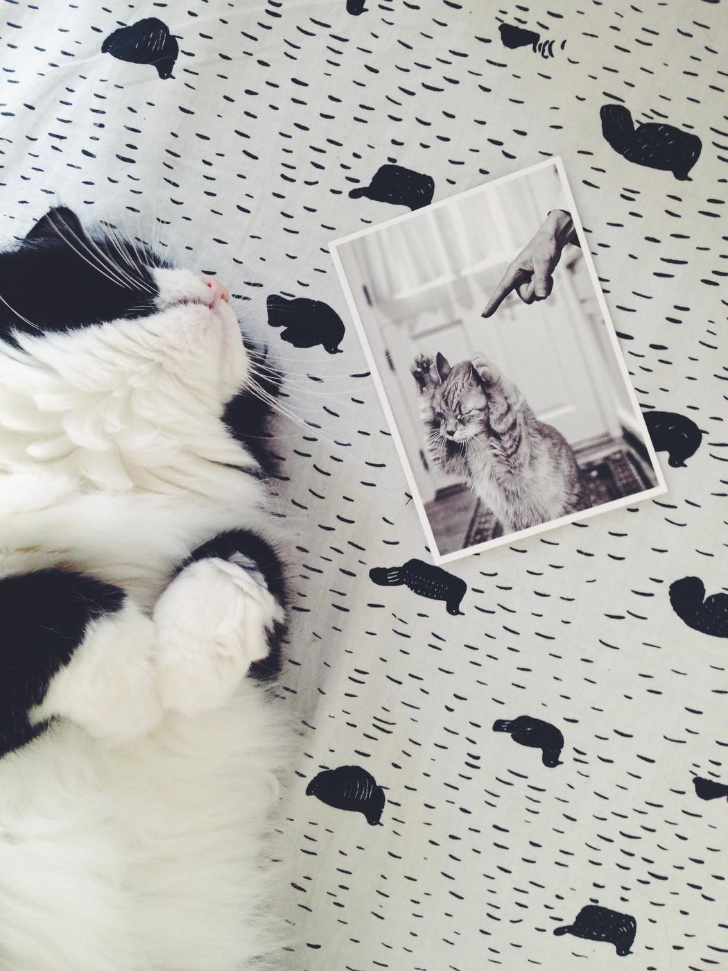 Kissanruokapaketin voittaja