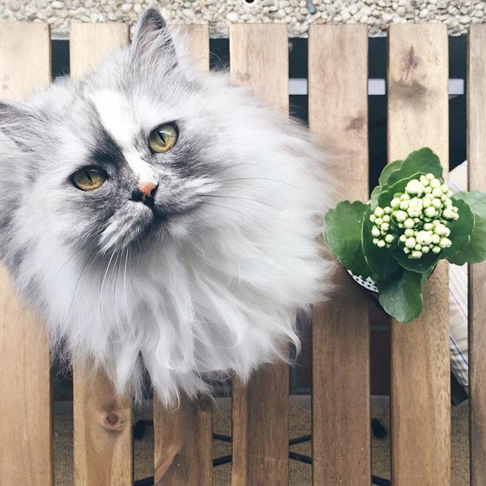 adopted-cat-fur-persian-halloalice-2.jpg