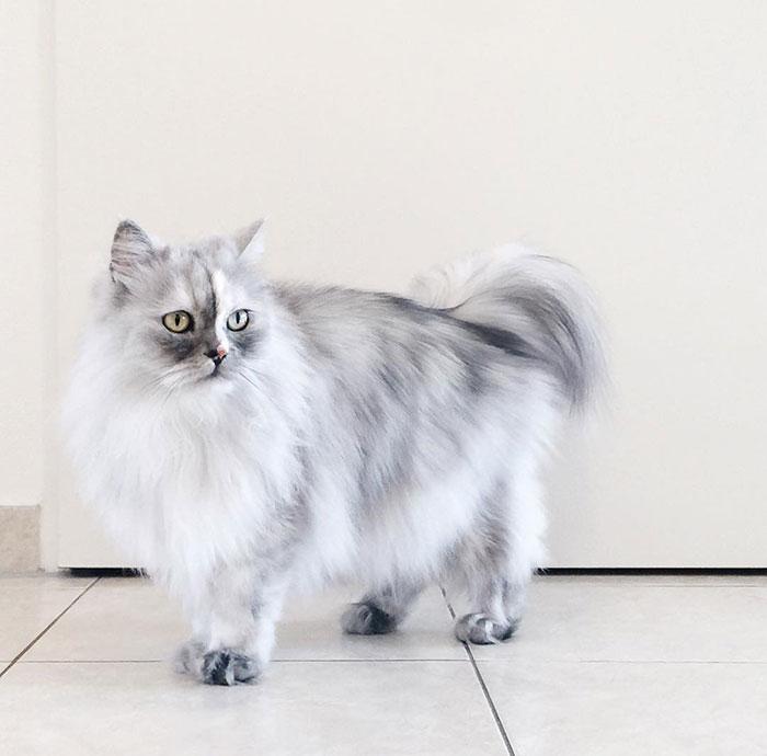 adopted-cat-fur-persian-halloalice-30-1.jpg