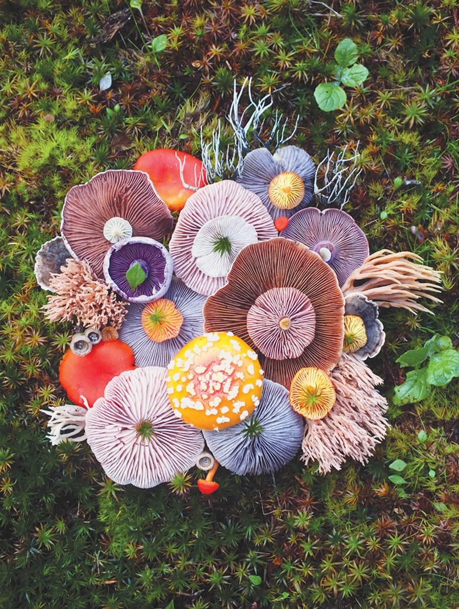 (Taide)sienimetsään!