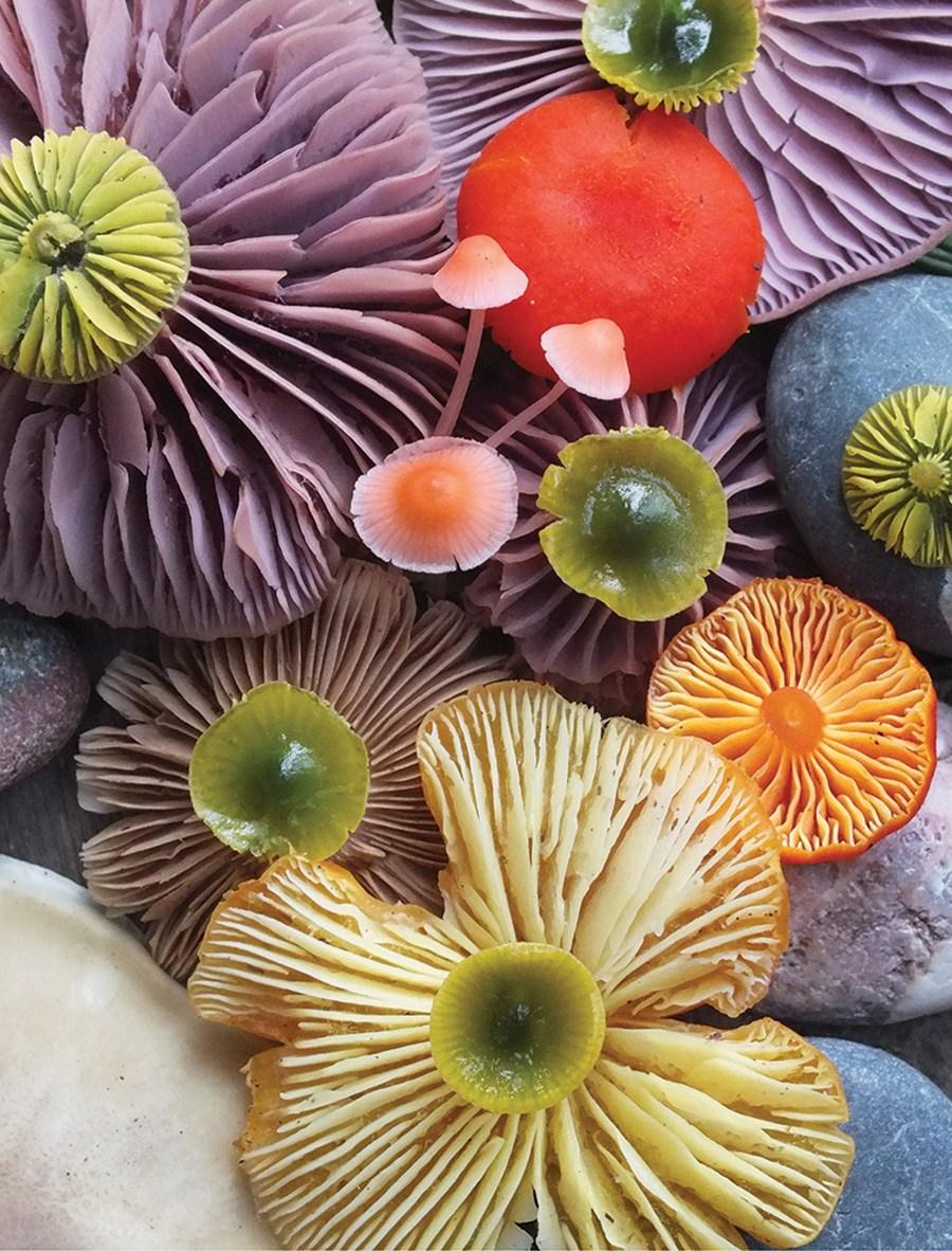 Wild-Mushroom-Menagerie-moss-and-fog-3.jpg