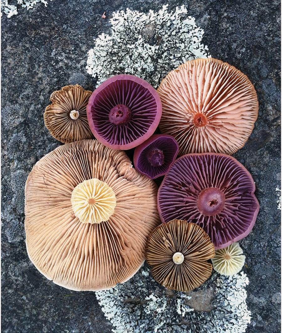 Wild-Mushroom-Menagerie-moss-and-fog-4.jpg