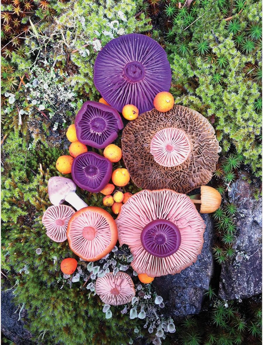 Wild-Mushroom-Menagerie-moss-and-fog.jpg