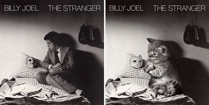 This-guy-created-very-cute-covers-of-the-music-world-replacing-singers-with-cats-5a2e4c0265d9d__700.jpg