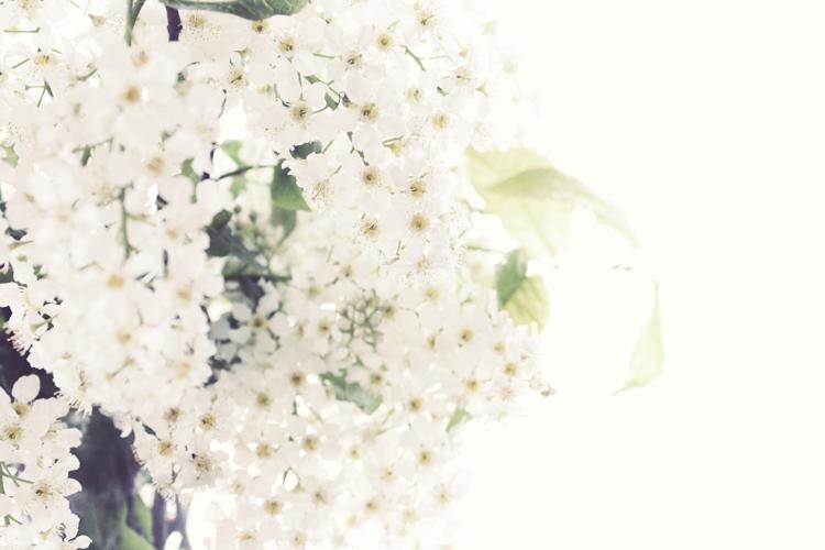 flower_017.jpg