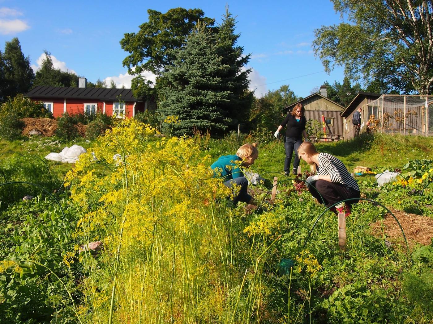 MENOVINKKI: Syötävä Puisto – mikä se on?