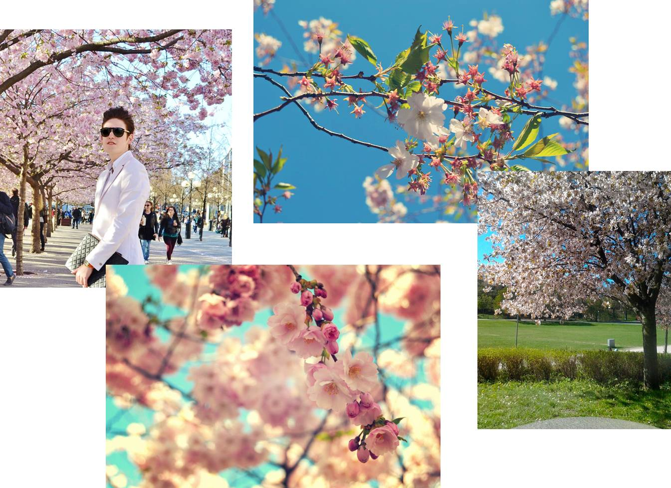 kirsikankukka.jpg