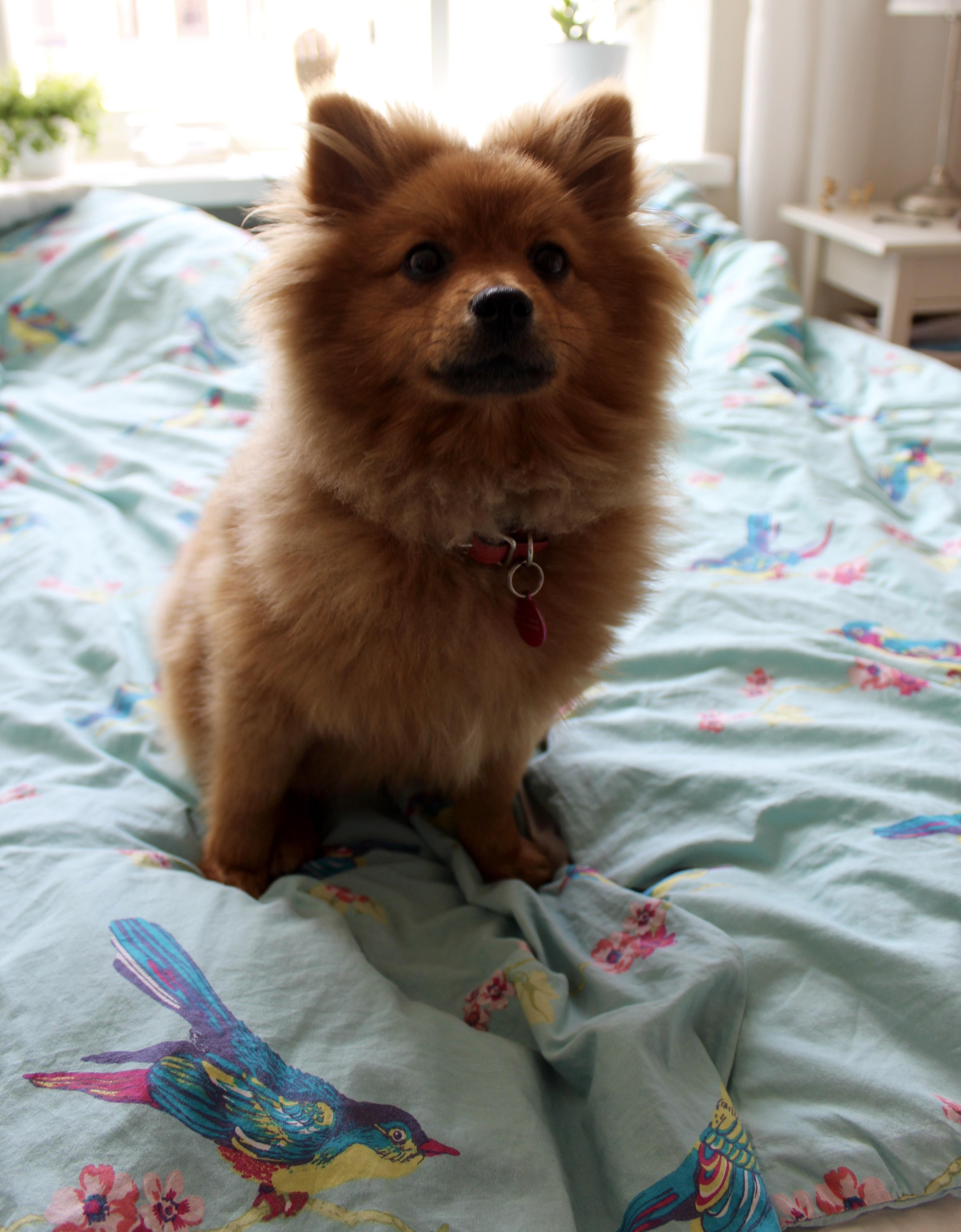 Mitä opetti ensimmäinen kuukausi koiranpennun kanssa?