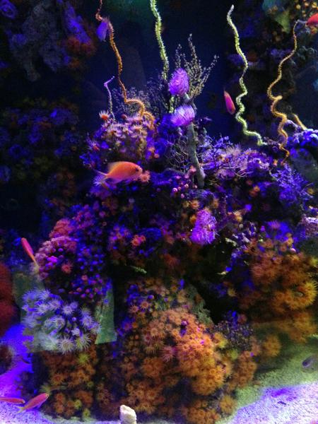 akvaario2small.jpg