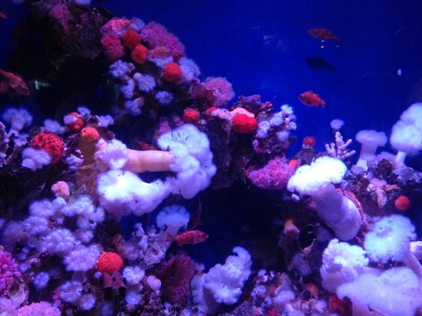 akvaariosmall.jpg