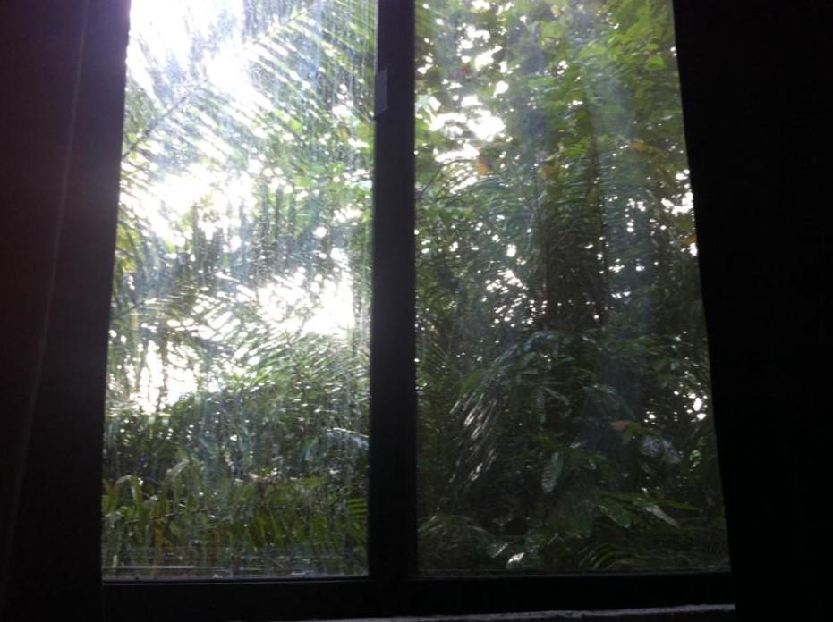 sademetsä ikkunassa.jpg