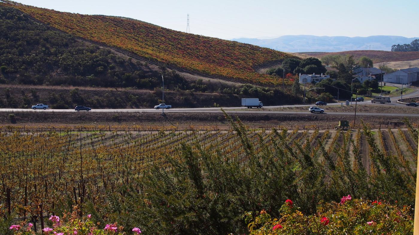 Viininmaistelu Napassa ja Sonomassa