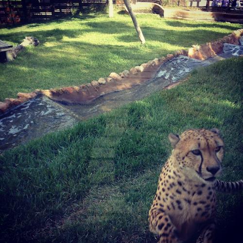 Selwo Zoo