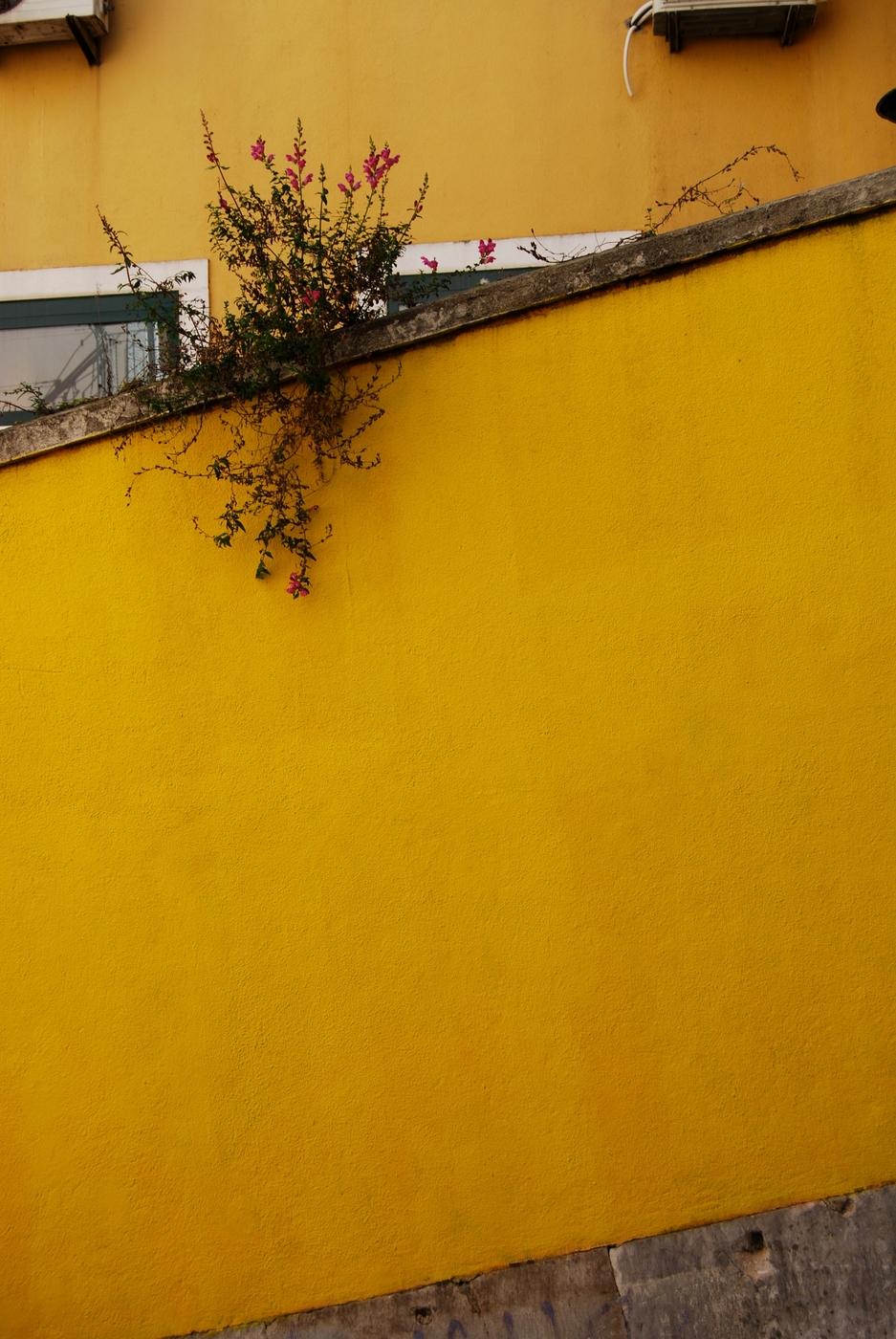 Yellow_2018_Lissabon.jpg