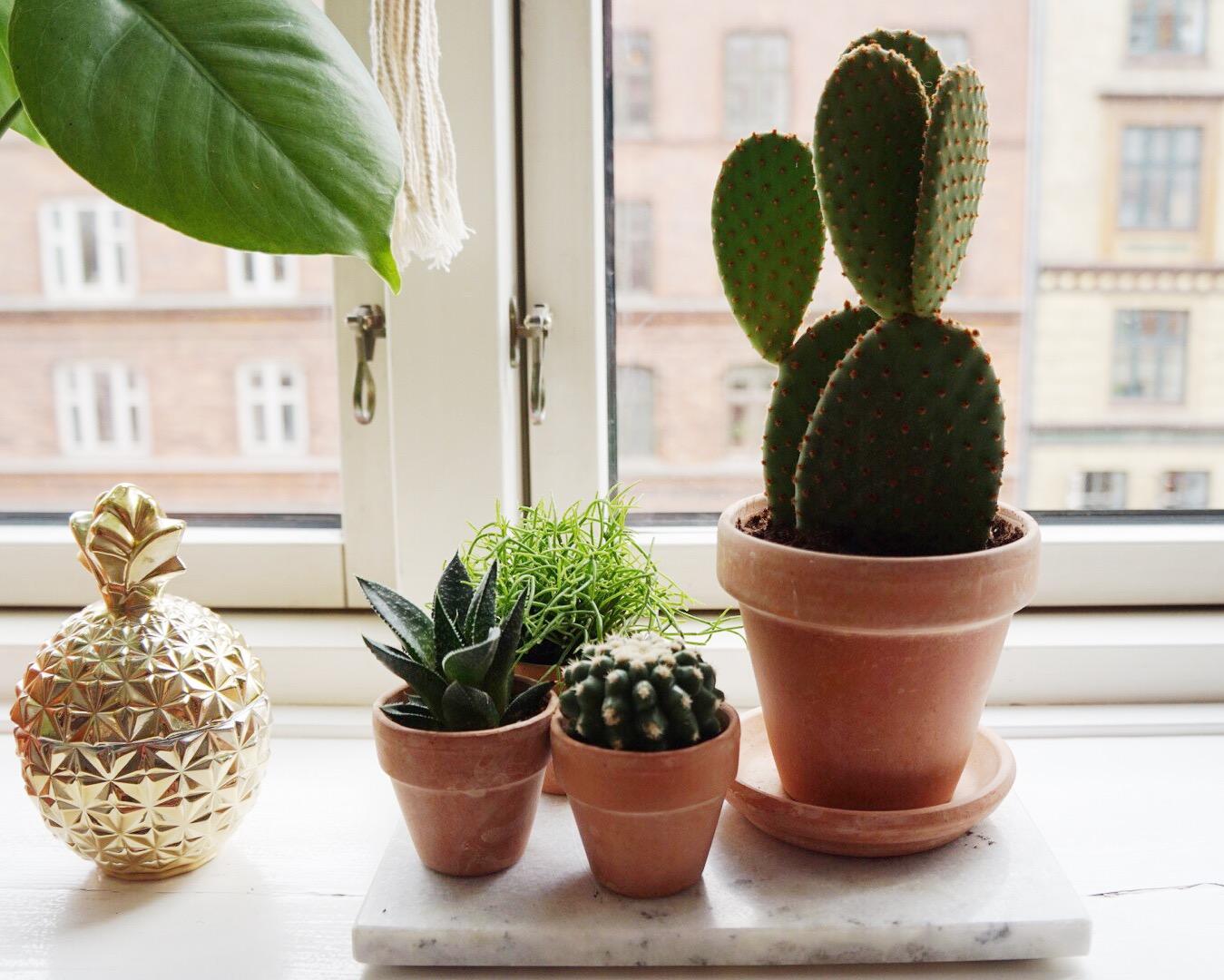 Kaktuksia ja tulevaisuuden uhkakuvia