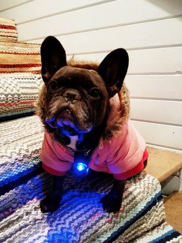 koiran takki.jpg